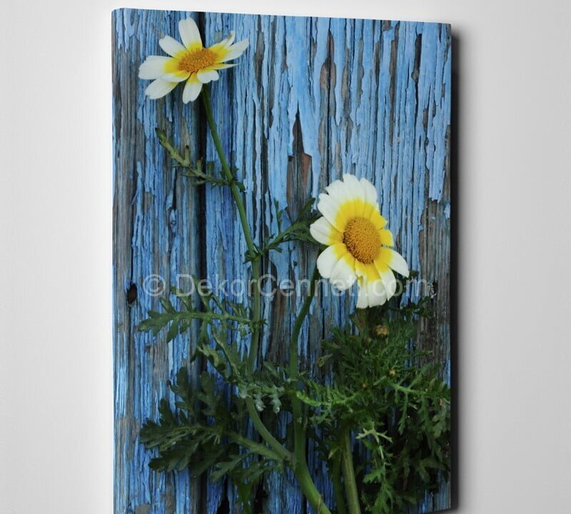 Beyaz Papatyalar Çiçekli Canvas Tablo