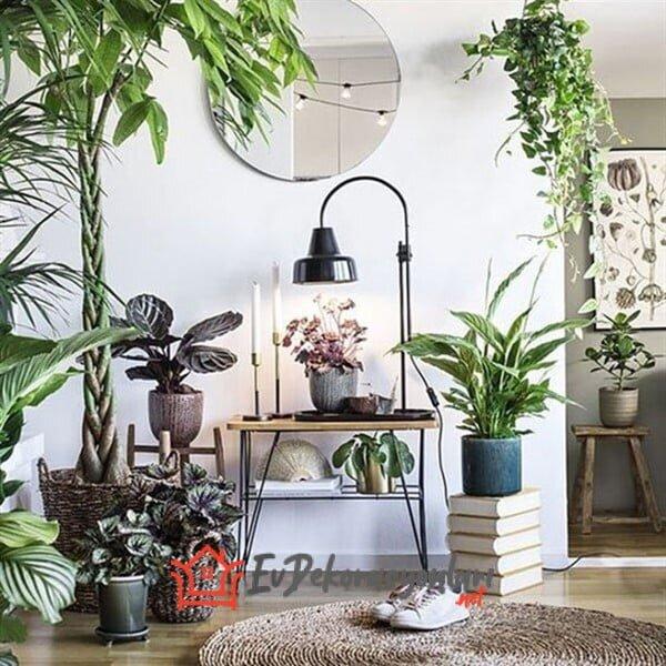 Evinizi Canlandıracak Bitkilerle Dekorasyon Fikirleri