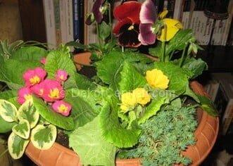canlı bitkiler ile saksı aranjmanı