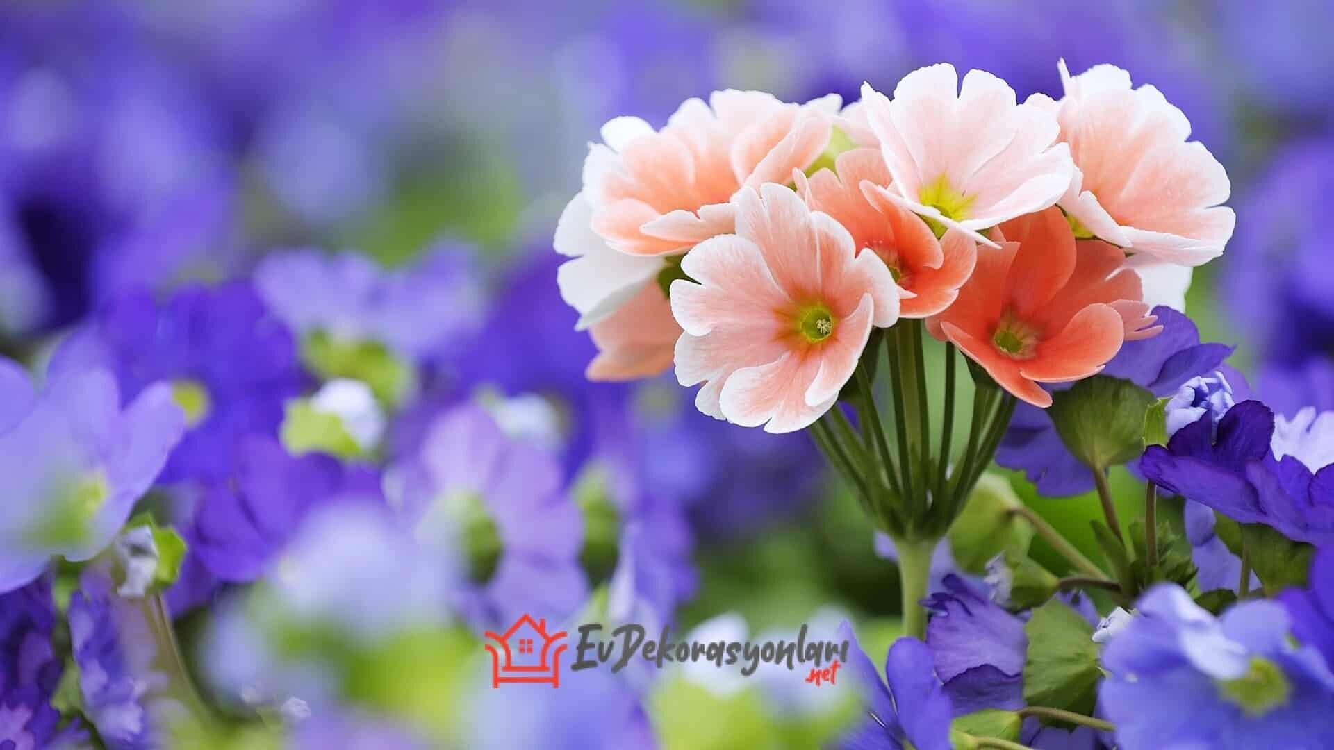 Ev İçinde Hangi Çiçek Büyütülür ?