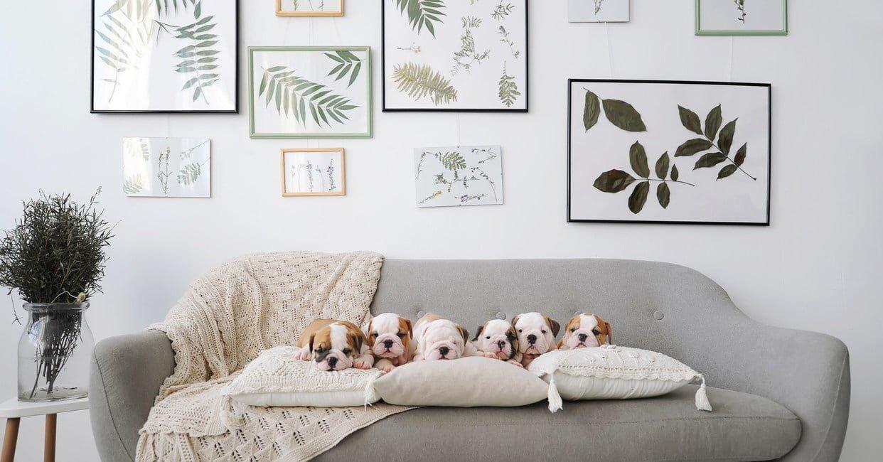 Evde Hayvan Bakımı Odası Önerileri