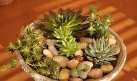 farklı bitkiler aynı saksıda