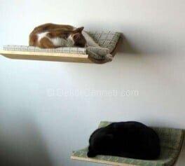 Harika evcil hayvan yatakları Resimleri