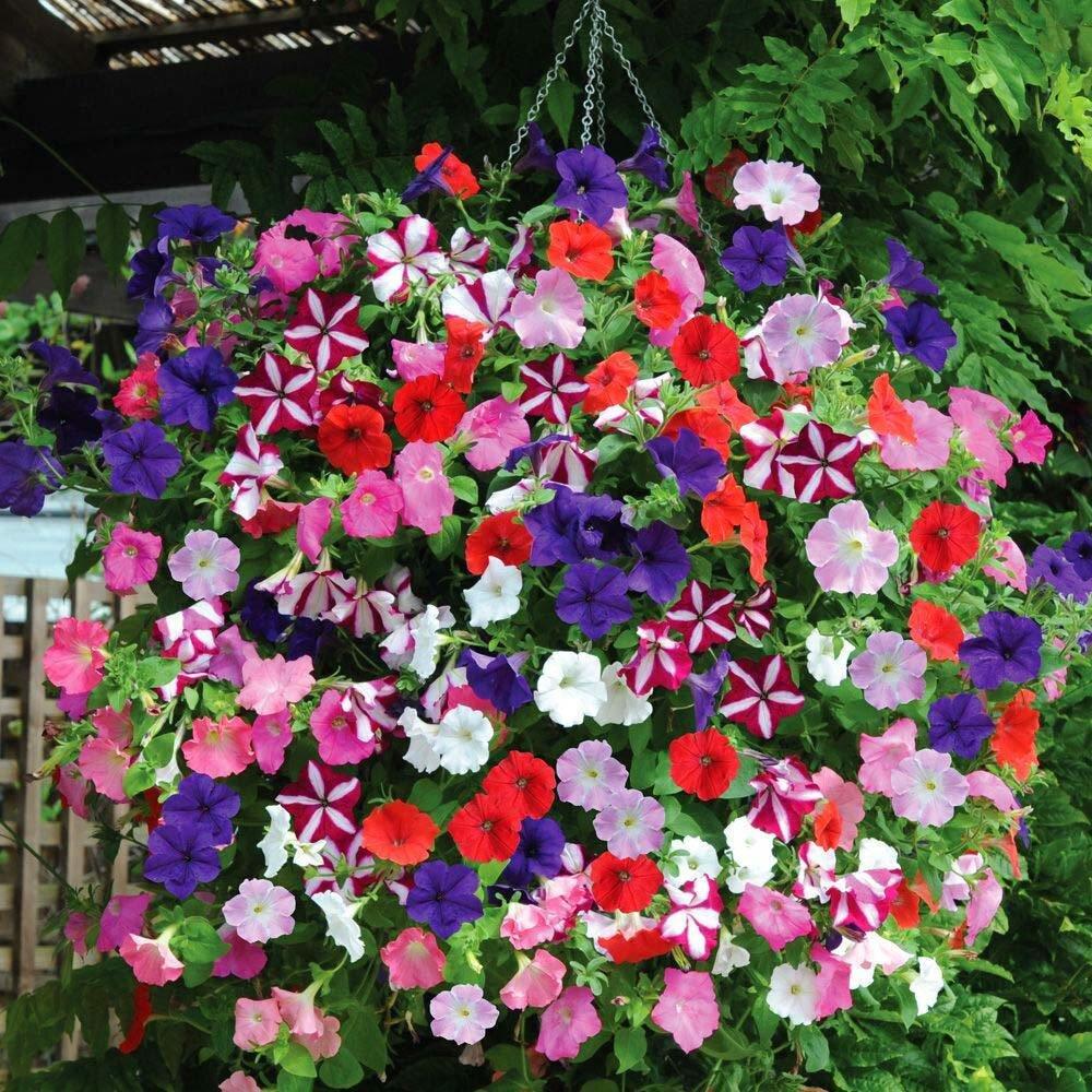 Sarkan Balkon Çiçekleri ile Balkon Dekorasyonu