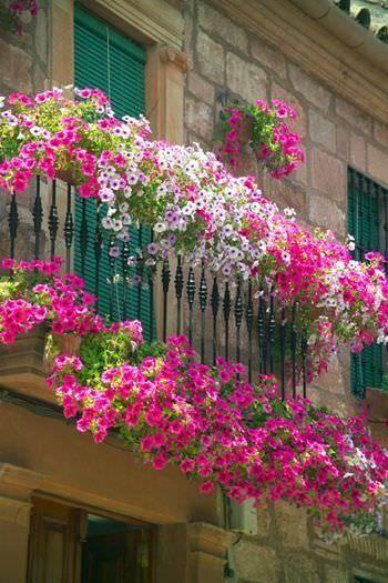 sarkan balkon cicekleri ile balkon dekorasyonu 47156