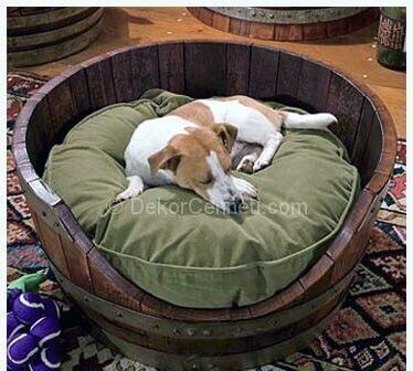 Trend evcil hayvan yatakları Fotoğrafları
