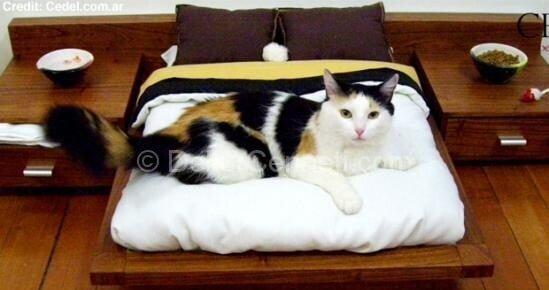 Yeni evcil hayvan yatakları Modelleri